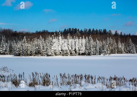 A field and trees covered with snow under a blue sky; Quebec, Canada - Stock Photo