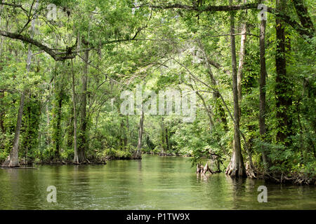 Dead River river in Lake County, Florida.  Lots of green! - Stock Photo