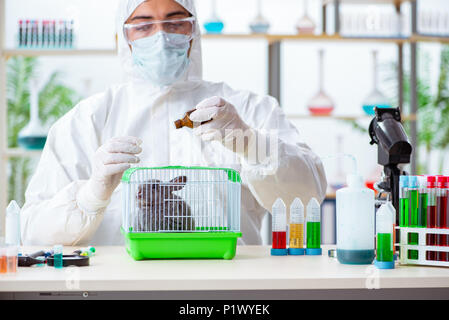 Scientist doing testing on animals rabbit - Stock Photo