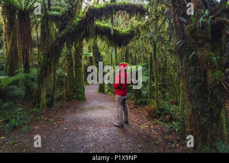 Man Enjoying New Zealand rainforest details landscape - Stock Photo