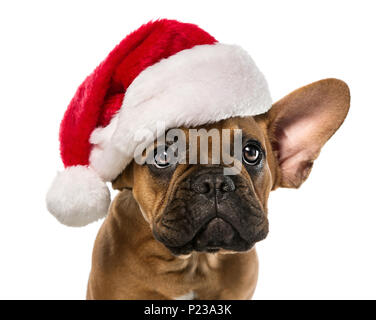 Close up of cute, little french bulldog with santa claus hat isolated on white background - Stock Photo