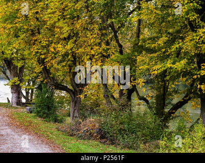 Autumnal bank of the Rhine near Eglisau - Stock Photo