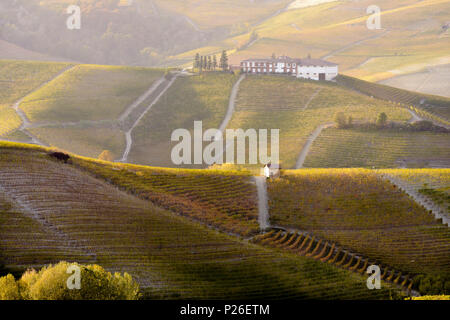 The vineyards of the Langhe in Autumn. Italy, Piedmont, Cuneo district, Langhe - Stock Photo