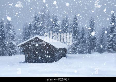 Old mountain barn under a copious snowfall, Ansiei valley, Auronzo di Cadore, Dolomites, Belluno, Veneto, Italy - Stock Photo