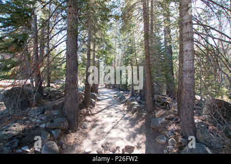 Filtered sunlight on the John Muir hiking trail in Yosemite National Park in California United States - Stock Photo