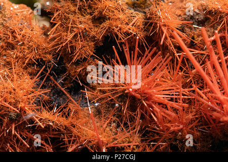 crocoite red rock detail macro crystal - Stock Photo