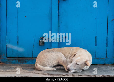 Sleeping dog in front of blue painted doors - Stock Photo
