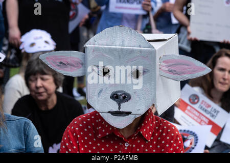 London 14th June 2018, End live animal transport protest on Parliament Square, London Credit Ian Davidson/Alamy Live News - Stock Photo
