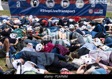 London 14th June 2018, End live animal transport protest on Parliament Square, London a die in by activists, Credit Ian Davidson/Alamy Live News - Stock Photo
