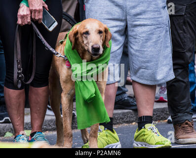 Dog standing with his owner, wearing the green scarf to mark the anniversary of the Grenfell fire, London, England, UK, 14th June 2018 - Stock Photo