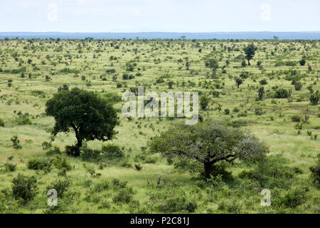 View of the savannah in Kruger National Park Game Reserve South Africa - Stock Photo