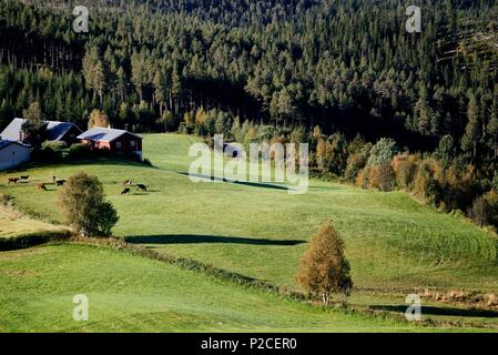 Norway, Oppland, Vaga, Jotunheimen National Park, farm and fields - Stock Photo