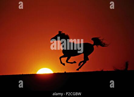 Original Film Title: THE YOUNG BLACK STALLION.  English Title: THE YOUNG BLACK STALLION.  Film Director: SIMON WINCER.  Year: 2003. Credit: KENNEDY/MARSHALL COMPANY, THE/MOONLIGHTING FILMS/WALT DISNEY / BOTHA, ROBERT / Album - Stock Photo