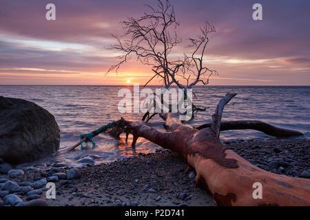 Sunrise along the Baltic Sea Coast, Chalk cliffs at Jasmund National Park, Ruegen Island, Mecklenburg Western Pomerania, Germany - Stock Photo