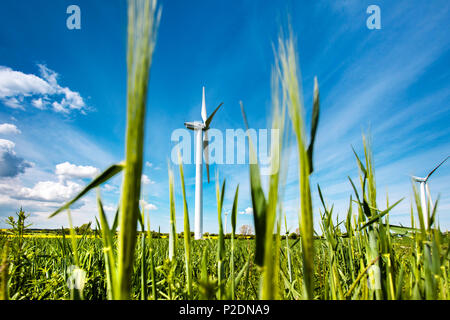 Wind turbine in a field, Baltic Coast, Schleswig-Holstein, Germany - Stock Photo