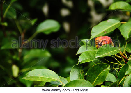 In The Garden (close-up) - Stock Photo