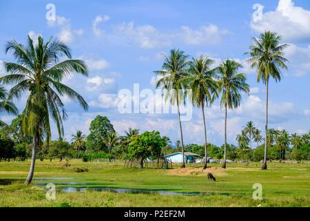 Thailand, Trang province, Ko Sukorn island, surroundings of Ban Laem village - Stock Photo