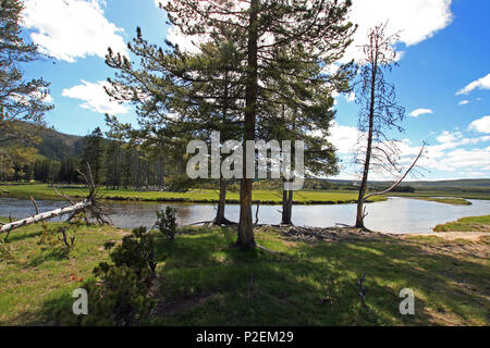Gibbon River flowing through Gibbon Meadows in Yellowstone National Park in Wyoming United States - Stock Photo