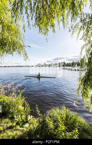 scullers and boats on the Outer Alster, Hamburg, north Germany, Germany - Stock Photo