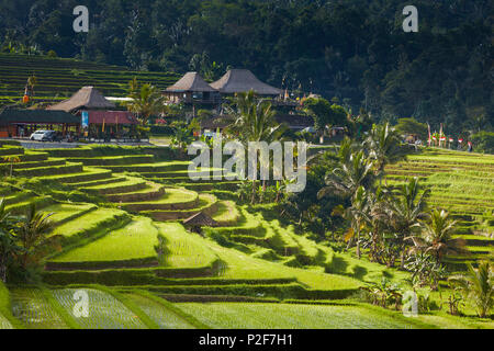 Rice Terraces Jatiluweh, Bali, Indonesia - Stock Photo