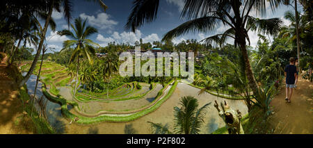 Rice terraces, Tegalallang, Bali, Indonesia - Stock Photo