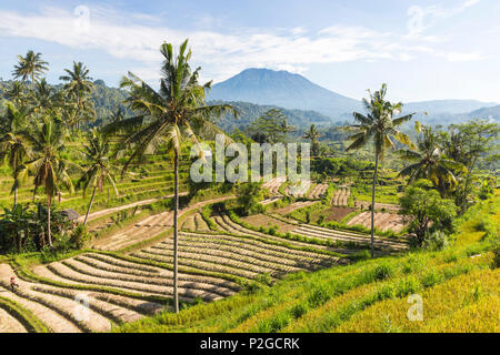 View over rice terraces, Gunung Agung in background, Sidemen, Bali, Indonesia - Stock Photo