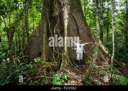 Giant tree with buttress roots in the rainforest at Tambopata river, Tambopata National Reserve, Peru, South America - Stock Photo
