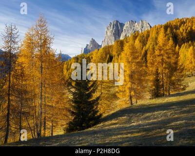 Croda del Longes, Pomagagnon with larch trees, Passo Tre Croci, Veneto, Dolomites, Italy - Stock Photo