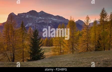 Tofane from Passo Tre Croci and larch trees, Veneto, Dolomites, Italy - Stock Photo