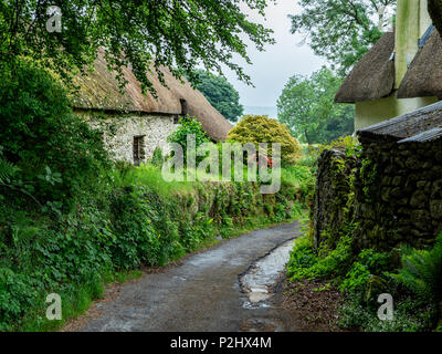 Narrow lane with ancient thatched cottages in a quiet corner of Hexworthy village on Dartmoor on a typically wet summer day- Devon UK - Stock Photo