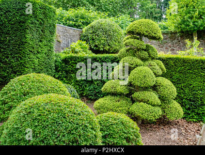 Clever use of sculptural topiary shapes in a domestic garden setting with clipped box and holly - Stock Photo