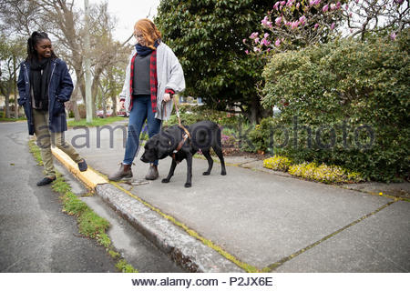 Visually impaired woman with seeing eye dog stepping off curb - Stock Photo
