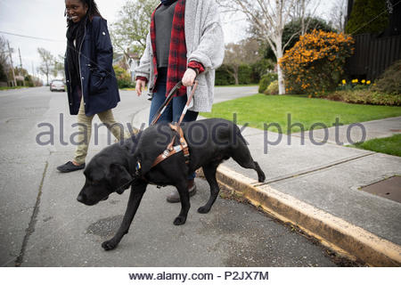 Seeing eye dog leading visually impaired woman walking in street - Stock Photo