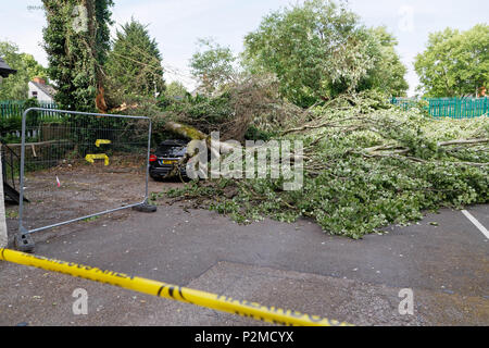 Pictured: The Mercedes GLA220 car which has been crushed by a tree in Cardiff, Wales, UK. Friday 15 June 2018 Re: A large tree has fallen and crushed  - Stock Photo