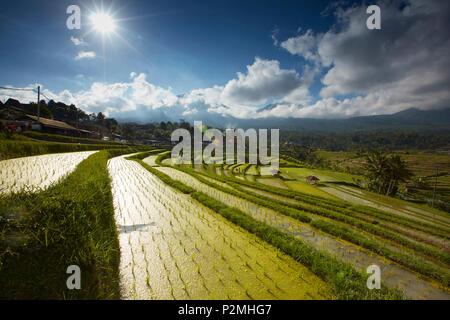 Rice terraces Jatiluweh, Bali, Indonesia - Stock Photo