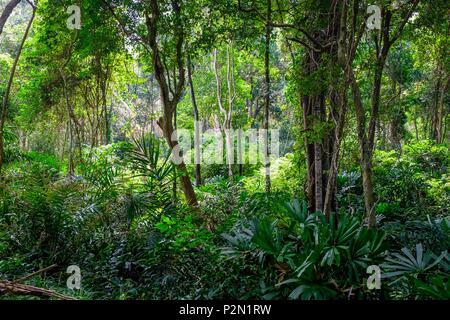 Thailand, Trang province, Ko Libong island, forest behind Tung Yaka beach west side of the island - Stock Photo
