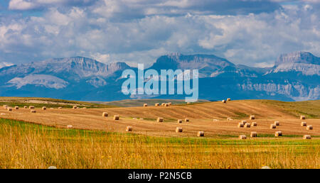 Hay bales and incredibly vast fields of grain are typical of the high plains of Montana. - Stock Photo