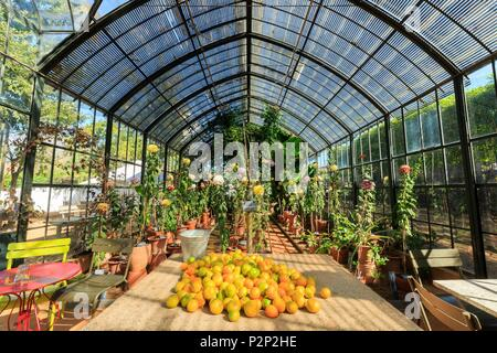 South Africa, Western Cape, Greenhouse of the Garden of Babylonstoren Estate, on the Wine Route, in the Winelands, near Stellenbosch - Stock Photo