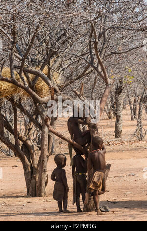 Himba children climbing a tree with weaver nest in the village, Damaraland, Kuene Region, Namibia - Stock Photo