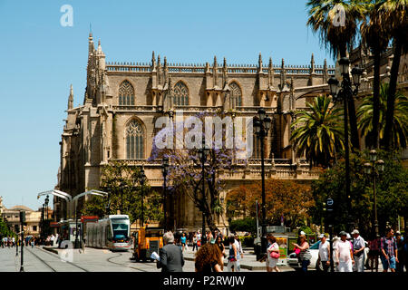SEVILLE, SPAIN - June 1, 2016: Pedestrians & city life near Seville Cathedral - Stock Photo