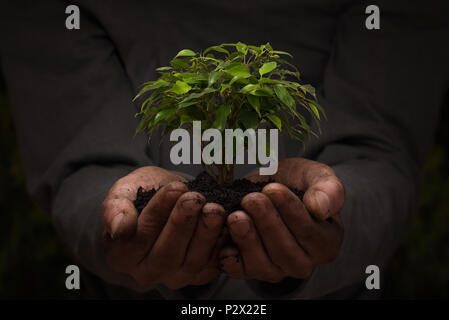 Close up of male hands holding small tree with copy space - Stock Photo