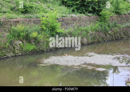 Local scenery of the historic Illinois Michigan canal in Lemont, Illinois. - Stock Photo