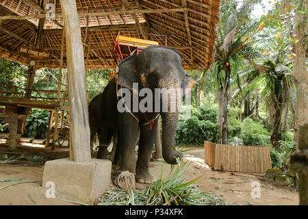 Tamed big elephant standing with yellow saddle. - Stock Photo