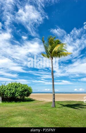 Solitary Palm Tree on the beach at Kota Kinabalu, Borneo, Malaysia - Stock Photo