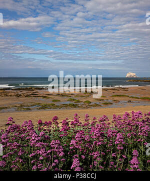 Daytime summer-time view at North Berwick looking across to Bass Rock, North Berwick, East Lothian, Scotland, United Kingdom - Stock Photo