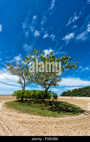 Clump of trees and a patch of grass on the beach at Kota Kinabalu, Borneo, Malaysia - Stock Photo