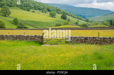 Wild flower meadows at Hubberholme, near Kettlewell in the Yorkshire Dales, England, UK - Stock Photo