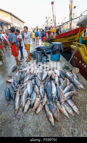 Large freshly caught tuna fish on sale by local fishermen at the fish market quayside in the harbour at Weligama on the south coast of Sri Lanka - Stock Photo