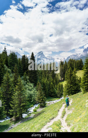 young woman hiking along a pristine mountain stream in a pine forest - Stock Photo