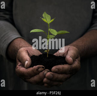 Close up of senior male hands holding small plant in hands with copy space - Stock Photo
